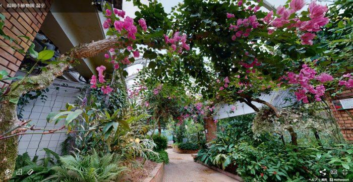 毎年一人一花サミットのメイン会場だった福岡市植物園では、実際に行けなくてもバーチャル体験ができるようになりました。温室とバラ園を、まるで実際に歩いているように360度上から下までマウスひとつで自由に楽しむことができますよ♪