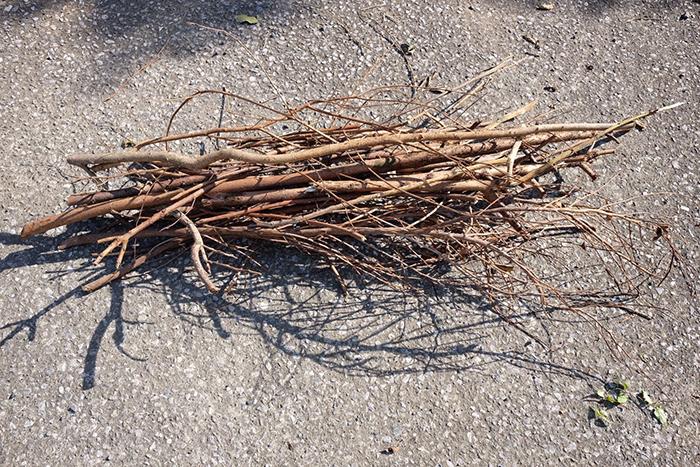 冬は樹木の剪定時期