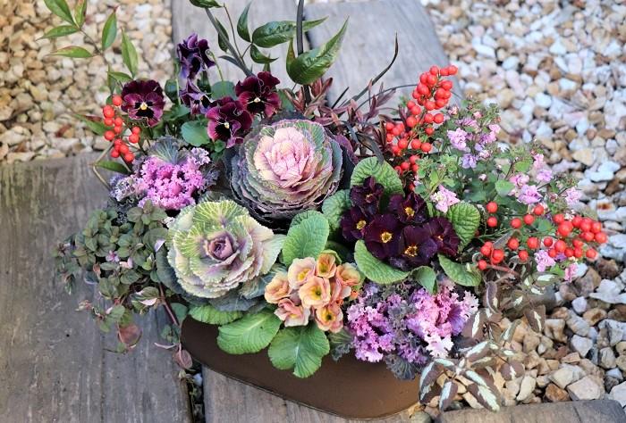 1月は一年の中で一番冷え込みが厳しくなりますが、耐寒性のある草花を使えば屋外で寄せ植えを楽しめます。寒さに強いハボタンやプリムラ、パンジー・ビオラなどをメインにリーフ類をプラスしてお気に入りの寄せ植えをつくりましょう。  写真の寄せ植えには、南天(なんてん)の赤い実(切り花)をピックのようにさしています。南天(なんてん)は難を転ずることにも通じるとされ、縁起木、厄よけ、魔よけとして古くから親しまれている常緑低木なのでお正月にぴったりです。お正月があけたら取って、アンティーク風の寄せ植えを思い切り楽しみます。  寄せ植えに使った草花  ヴィンテージテイストのハボタン フリンジ系のハボタン シャビーカラーのプリムラ フリルパンジー リシマキア'シューティングスター' バラ咲きバコパ コクリュウ ヘーベ ラミウム
