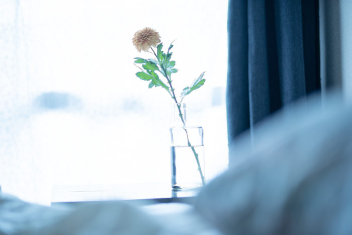 お正月におすすめの花材といえば、華やかなキク。キクの花は、年末にたくさんの色や形が花屋に並びます。日持ちするものが多いため、長く飾っておけるのも嬉しいポイントです。