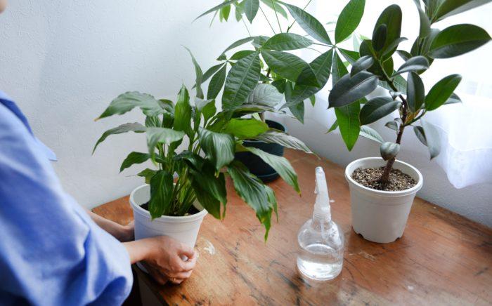 冬の室内植物お悩み① 水やりで気を付けることは?