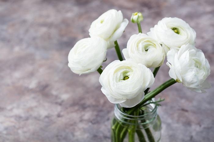 ラナンキュラスは、バラかと見紛うくらいのたくさんの花びらを持った美しい花です。バラのような雰囲気で、バラのように棘がないのも特徴です。