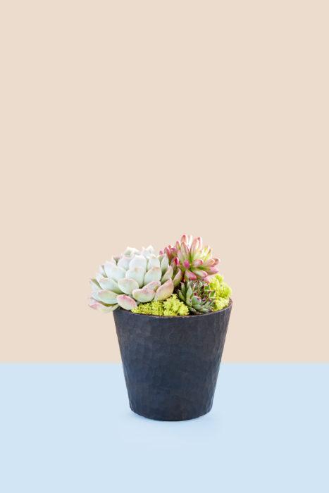 グリーンにピンクを差し色にした寄せ植え。セダム・オーロラは植える時に葉が取れやすいので優しく手早く植えるようにします。もし葉が取れたら、葉挿しにチャレンジしてみては。水は植えてから1週間〜10日後に与えましょう。