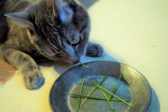 猫によって猫草の食べ方にも個体差があります。まったく食べない猫、気が済むと止める猫、食べ過ぎる猫。 猫が猫草を食べ過ぎてしまうようなら、様子を見てこちらから与えるようなルールにしてあげましょう。飼い主と猫のコミュニケーションにもなります。  目次に戻る≫  猫草の謎は解けましたか?大切なペットに与える猫草について、飼い主が正しく理解できていれば安心です。可愛い猫との時間をたくさん楽しんでください。
