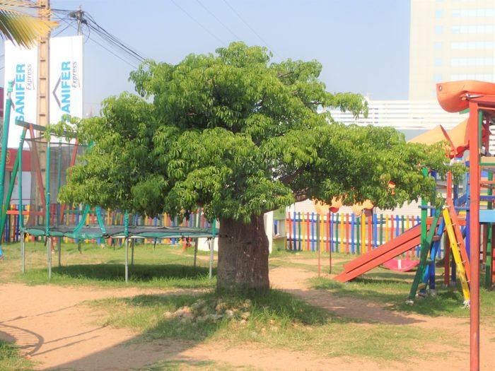 さらにここにはとてもお気に入りであるキュートなサイズのバオバブが植栽されていて、訪れる度に挨拶をしている。