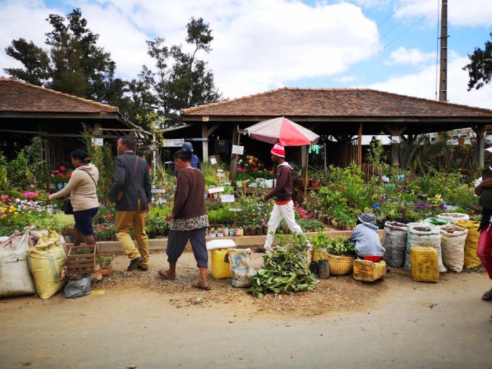 そして花や園芸品を売っているマーケットもあるので面白い。