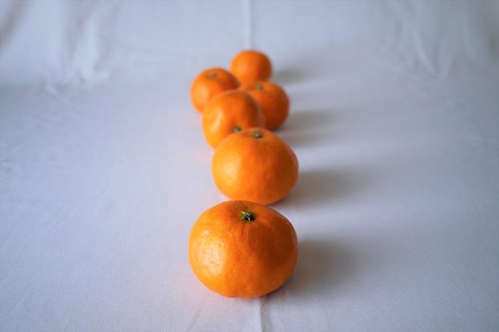 学名:Citrus unshiu 科名、属名:ミカン科ミカン属 分類:常緑低木 みかんの特徴 みかんは日本の冬を代表するような果物。「コタツとみかん」というイラストや表現もよく見かけます。そのくらい私たち日本人にとって馴染み深い果物だということでしょう。  みかんという名前で流通しているのはウンシュウミカンの仲間です。ウンシュウミカンが果樹として日本全国に広がったのは明治以降だと言われています。改良が重ねられ、現在の種がなく、食べやすいみかんが出来上がりました。今では多くの品種があります。温暖な地域を好み、柑橘類の中では比較的寒さに弱いのが特徴です。