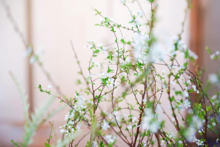その小さな花の一つ一つもとても可愛いですが、流れるような枝ぶりが、お花に自然な動きと季節感をもたらしてくれます。