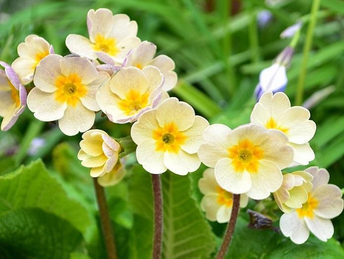 長くたくさんの花を楽しみたいのなら、置き場所の環境にあった植物を選ぶことが重要です。お日様が好きな植物、半日くらい日が当たればよい植物など、それぞれの植物によって好みの光の量があります。  育てる環境が日当たりが良いのか、あまり日が当たらないかによって、それに合わせた植物を選ぶと結果的に長くたくさんの花を咲かせてくれます。