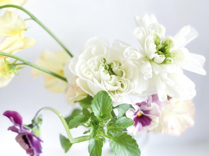 1月の1日1日それぞれにつけられた、その日の花と花言葉をご紹介。大切な人の誕生日には、その日の誕生花を贈ってみませんか?