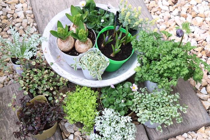 それでは、2月の寄せ植えに使いたい草花を紹介していきます。  2月はまだ寒さは続きますが、雨が降るたびに少しずつ暖かくなったり、植物たちの小さな芽吹きを感じられる月でもあります。2月ならではの草花を使って寄せ植えを作り、植物たちと一緒に春が訪れるのを楽しく待ちましょう。
