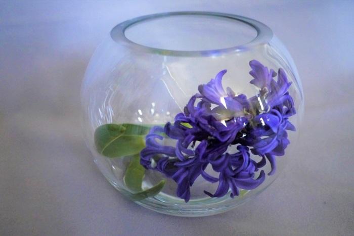 ヒヤシンスは何よりも香りが良いのが魅力。さらにつるりとした質感の花茎も相俟って、ガラス細工のようなテクスチャーを楽しめる花です。  ヒヤシンスのおすすめの飾り方は、透明なガラス容器に入れて飾ることです。飾る場所は玄関やトイレ、リビングルームがおすすめです。  帰宅した時、来客があったときなど、ふわりと花の香りが漂う玄関というのは、気持ちの良いものです。