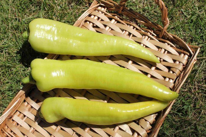 鮮やかな黄緑色が特長の「若穫りライムホルン」。フルーティで甘い果肉は、あっさりしていて、何個でも食べることができます。