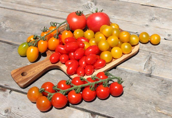 本気野菜ミニトマト純あまで育てるプランター家庭菜園