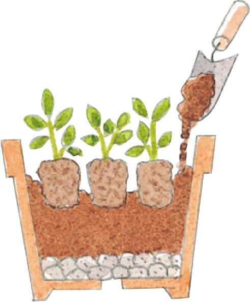 土に元肥が含まれていない場合は、元肥を混ぜましょう。必ず新しい土を使用してください。