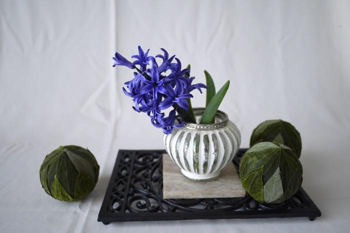 ヒヤシンスの花の咲く季節は春です。庭植えなど屋外で育てているヒヤシンスは3月~4月頃に開花します。寒冷地では4月~5月頃に咲くようです。  室内で水耕栽培しているヒヤシンスは一足早く、2月頃から開花を楽しめます。室内でも涼しいところで管理すれば、露地のヒヤシンスと同じように3月~4月に花を楽しむこともできます。