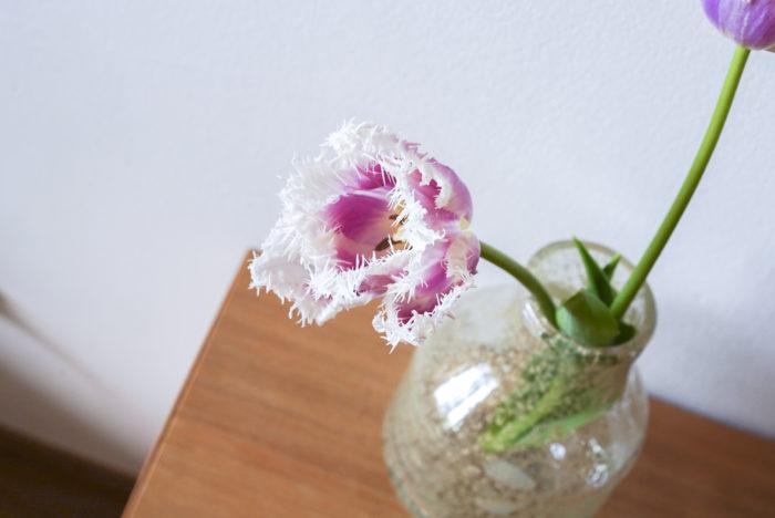 """ご覧の通り、ギザギザとした細かい切れ込みのはいった花びらが可愛い""""ハウステンボス""""。フリンジ部分がダイナミックに広がって独特の存在感と華やかさがあります。少しずつ咲いて変化いく姿に、癒されて、ますます愛着が湧いていきます。おうち時間のおともにお気に入りの咲き方のチューリップを見つけてみてくださいね。"""