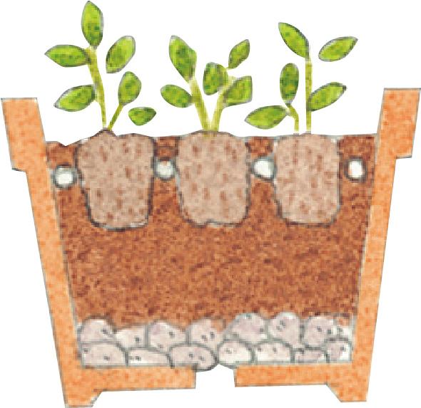 苗の枯れた下葉を取ります。苗を鉢の中心に置いて、植え込みます。ポット苗の土の表面と植え込んだ土の表面の高さが揃うように植えて、根がむき出しにならないようにすることがポイントです。土を入れる量は、鉢の縁から2~3cm残してウォータースペース(水やりの際に水が鉢からあふれない程度のスペース)を作りましょう。
