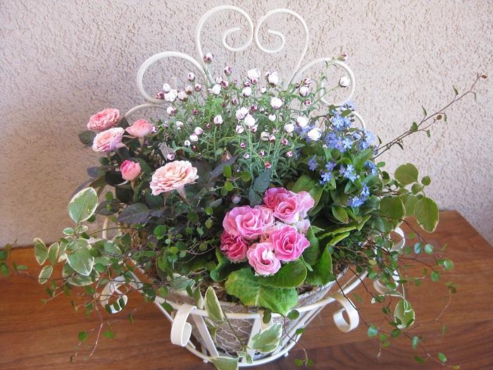 これは花かんざしを使った寄せ植えです。花かんざしはメインの花を引き立たせるわき役の小花として、全体のバランスを美しく整えています。