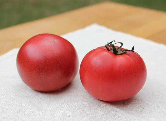 初めての家庭菜園では育てやすいミニトマトが選ばれる傾向が高く、大玉トマトは難しいのでは?と思われがちですが、初めてでも経験者でも作りやすくおすすめなのが「こいあじ」。