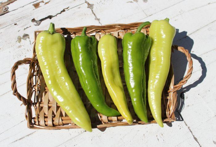プランター栽培が可能で長く収穫できるので、初心者の方におすすめの「グルメピーマン」。特長は、柔らかで甘い果肉。ピーマン嫌いでもパクパク食べられる美味しさです。
