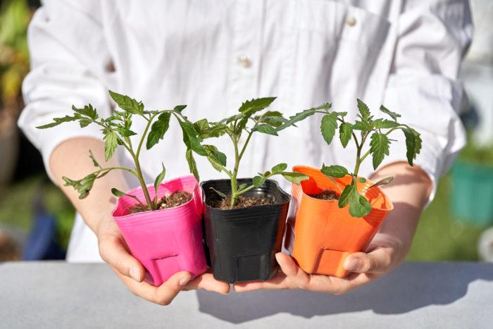 家庭菜園で人気のトマトやナス、キュウリ、ピーマンなどは、7~8月に収穫期を迎える夏野菜で、植えつける時期は4月末~5月のゴールデンウィークにかけてがベストシーズンです!上写真のようなポット苗でたくさんの種類の野菜苗が売られているので、長期連休を利用して、家庭菜園を始めるのにピッタリですよ♪