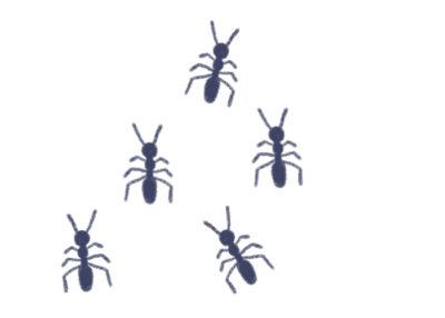 アリの生態