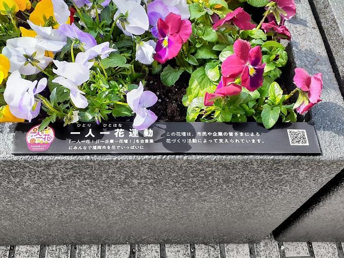 今回、新型フラワーポット(一部)に植えるお花を提供するのは、鉢物の消費拡大を推進する「全国鉢物類振興プロジェクト協議会 (略称:鉢プロ)」の福岡エリアの協議会。福岡の花関係者が団結してたくさんのお花を提供しているので、いつもより多くのお花が街にあふれていますよ♪