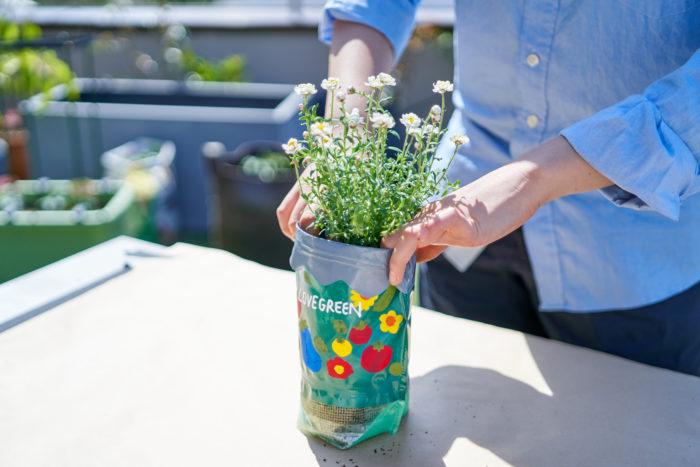 編集部オリジナルの鉢にお花を植えました