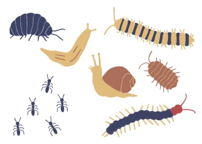 害虫の種類・被害について