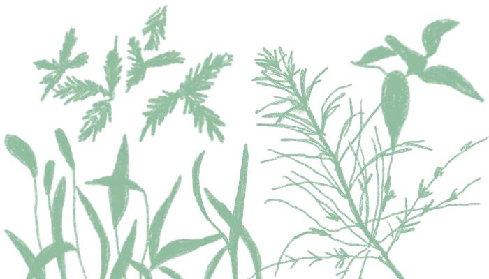 目的別の除草剤の選び方