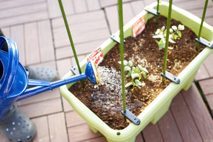 ➄苗を植え終わったらたっぷりを水やりをしましょう。支柱も立てて準備完了!