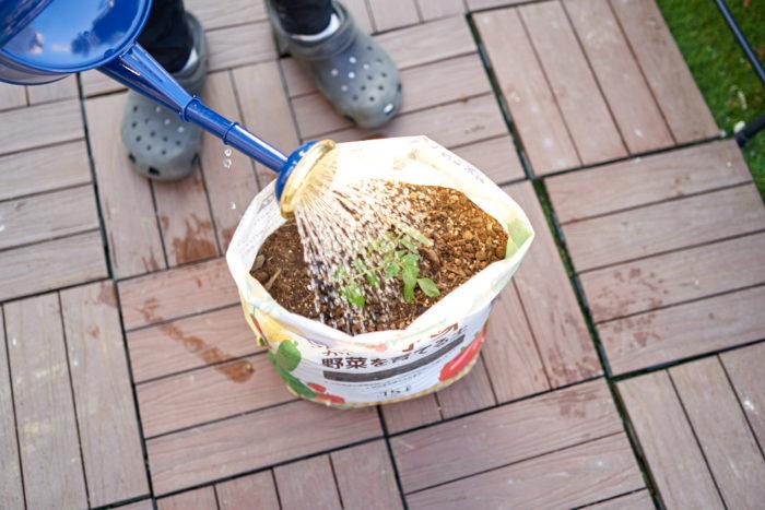 ⑥袋の下から流れ出るぐらいたっぷり水やりをして、植えつけ完了!