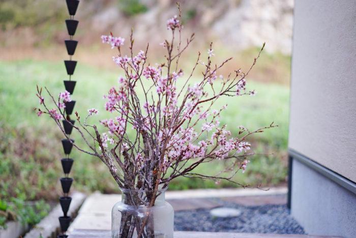 まずは玄関。室内で飾る場合はどうしても暖かくてすぐに咲いてしまうので、まだまだ外が寒い時期は長く楽しむためにドアのすぐ脇のところに飾っています。
