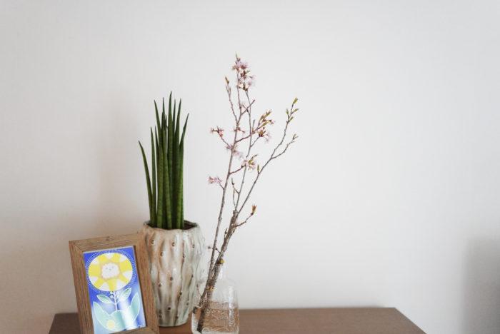 枝物というと、「ちゃんとした器がないと」と、ハードルが高い印象をお持ちの方も多いと思います。  枝が細めの小ぶりな桜なら、小さな花瓶ととてもよく馴染みます。少し長めに生けてあげると、より桜の枝ぶりまで楽しむことができますよ!