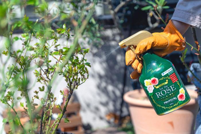 水で薄めず、そのままスプレーするだけなので使い方も簡単!植物に優しい水性処方で、イヤなにおいもないため、ベランダなどで隣家に気を遣うことなく使用したい時にもおすすめです。