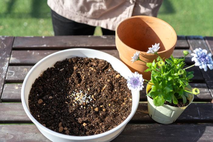 「Plantia 花と野菜と果実の肥料」を使って花苗を植えつけます