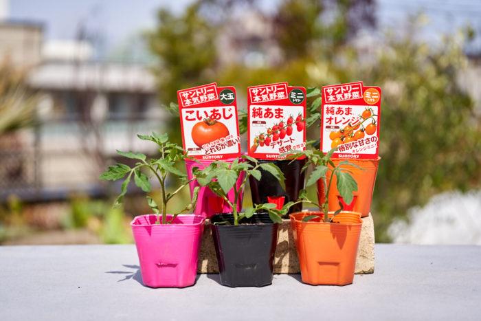 これまでご紹介した、トマト、キュウリ、グルメピーマンの各種食べ比べセットをLOVEGREEN STOREで特別に予約販売が決定!