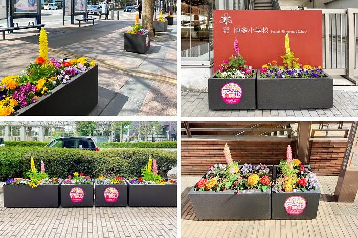 博多地区を中心に、幹線道路沿いや公共施設の前など、市内各所を季節の花が彩っています。