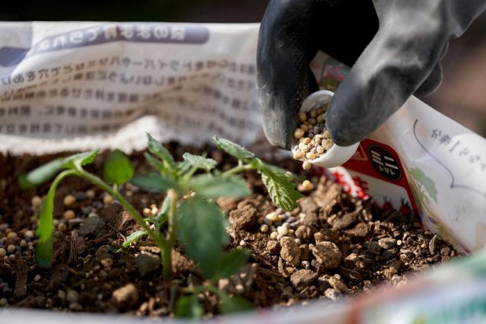 本気野菜ミニトマト純あまで育てるプランター家庭菜園の肥料