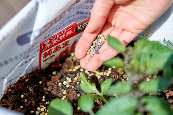 こんな感じで、「今日から野菜 野菜の肥料」を株のまわりにパラパラとまくだけでOK!