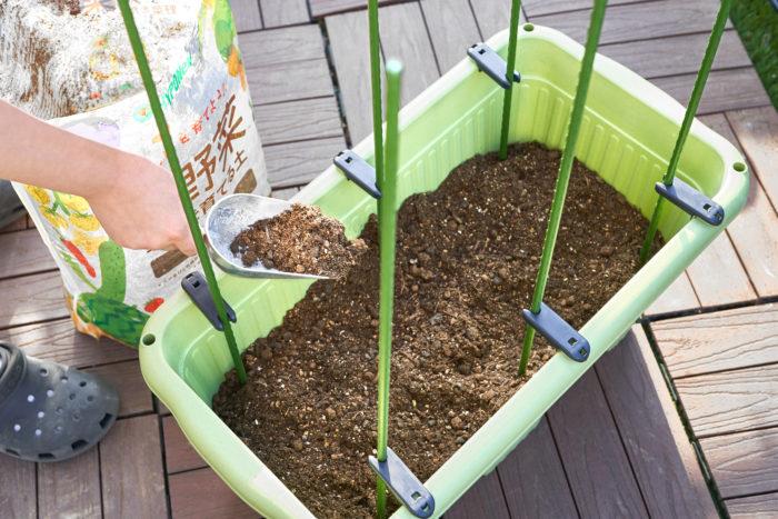 ②鉢に合った量の土を入れて支柱を立てたら、苗と同じぐらいの大きさの穴を空けます。
