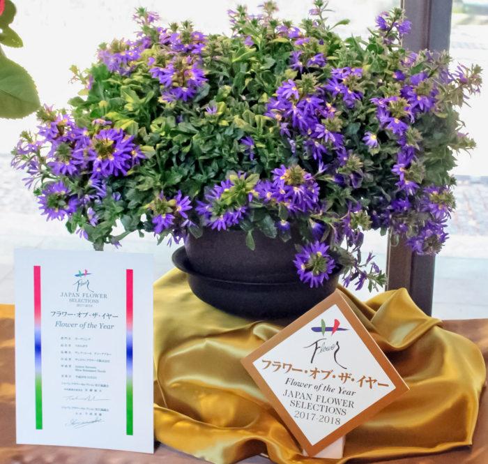 最も優秀な花に贈られるフラワー・オブ・ザイヤーを受賞した「サンク・エール」