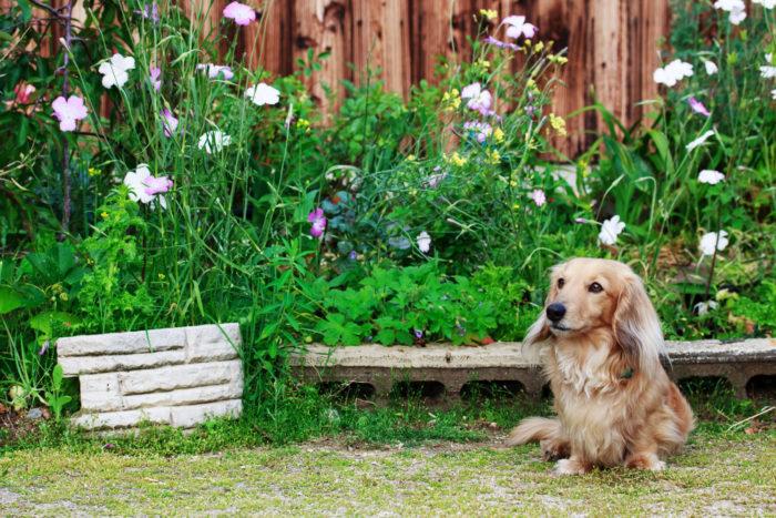 花や野菜を育てていたり、ペットがいる庭で除草剤は使えるの?