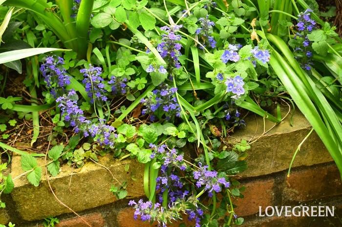 あとは好きな植物を植えこむだけです。色や雰囲気を統一させれば素敵なお庭になります。趣味を最優先して育てたいものを植えこんでも良いでしょう。DIYで好みの花壇作りを楽しみましょう。