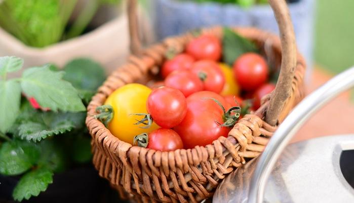 野菜は、苗を植えてから1年で収穫して、花や葉、茎、根、果実などを食用にするする草本植物。野菜のどの部分を食べるかによって、果菜類(トマト、キュウリ、イチゴなど)、葉菜類(キャベツ、ホウレンソウ、コマツナなど)、根菜類(ニンジン、ダイコン、サツマイモなど)の3種類に分けられます。