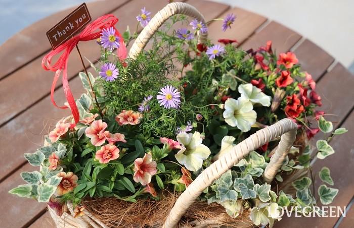 5月には母の日もあるので、寄せ植えを作ってプレゼントするのもいいですね。写真の寄せ植えは、手つきのかごに苗を植え付けています。  寄せ植えに使った草花  ペチュニア カリブラコア2種 ブラキカム アイビー
