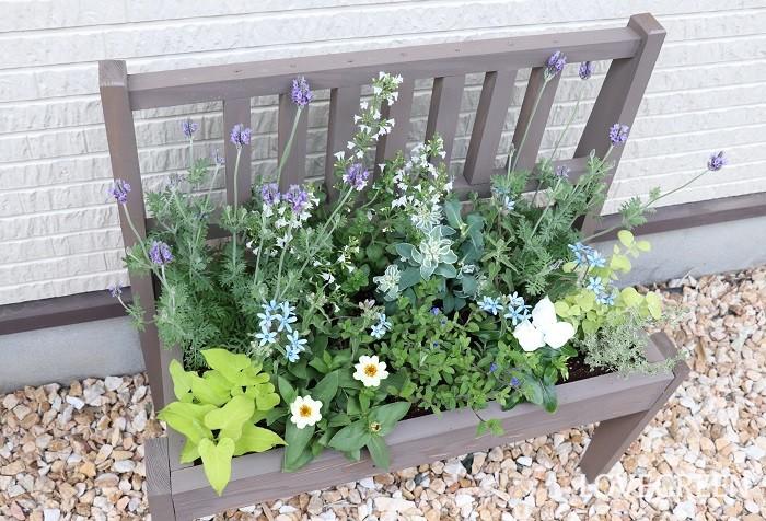 少し大きめのプランターに寄せ植えを作ると、ちょっとした花壇のように広々と楽しめます。5月は植物たちが生育旺盛なので育てやすく、水やりのたびに生長を感じて嬉しくなります。  寄せ植えに使った草花  レースラベンダー ジニア ニチニチソウ アメリカンブルー ブルースター ハツユキソウ カラミンサ イポメア クリサンセマム・ペティオラレ タイム 先月は「4月の寄せ植えに使いたいハーブと野菜15選」を紹介しました。これらのハーブと野菜は5月の植え付けでもまだ間に合います。春~初夏の絶好のガーデニングシーズンにぜひ育ててみてくださいね。