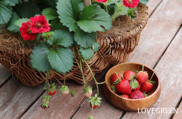 収穫の作業は楽しい!自分で育てた野菜やハーブ、果樹は格別に美味しいですよね。自分で育てると、その花が咲く季節や野菜・果物の旬を知り、季節を感じる喜びも味わえます。