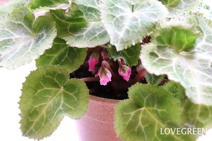 植物が上手に育ったときや、水やりのコツをつかんだとき、ガーデニングの腕が上がったと感じて嬉しくなりませんか。枯れたと思っていた植物から小さな芽が出てきたときの感動はたまりません。枯らさずに長い間育てることができたり、毎年花を咲かせることができる頃には、きっとガーデニングが自分の暮らしになくてはならないものになります。衣・食・住に植をプラスした、衣・食・住・植の生活スタイルは本当に理想的だなと思います。
